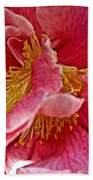 Center Of A Pink Camellia At Pilgrim Place In Claremont-california  Beach Towel