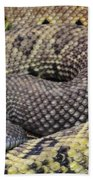 Central American Rattlesnakee Beach Towel