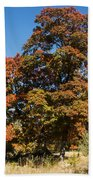 Changing Maple Colors Beach Towel