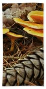 Chanterell Mushrooms  Beach Towel