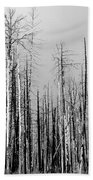 Charred Trees Beach Towel