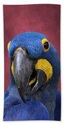 Cheeky Macaw Beach Towel