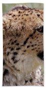 Cheetah No. 2  Beach Towel