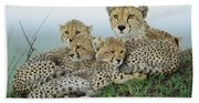 Cheetah And Her Cubs Beach Towel