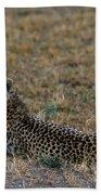 Cheetah At Rest Beach Towel