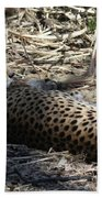 Cheetah Awakened Beach Towel