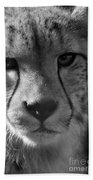 Cheetah Black And White Beach Sheet