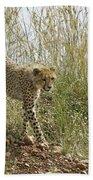 Cheetah Exploration Beach Towel