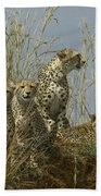 Cheetah Family Beach Towel