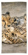 Cheetah Lounge Cats Beach Towel