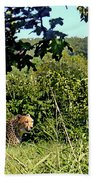 Cheetah Zoo Landscape Beach Towel