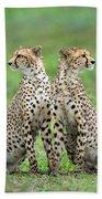 Cheetahs Acinonyx Jubatus In Forest Beach Towel