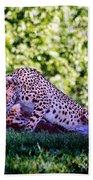 Cheetahs In Love Beach Towel