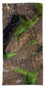 Chelidonura Punctata Nudibranch Beach Towel
