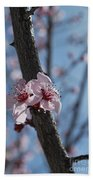 Cherry Blossom Branch Beach Towel