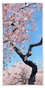 Cherry Blossom Trilogy II Beach Towel