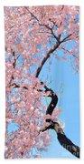 Cherry Blossom Trilogy IIi Beach Towel