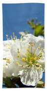 Cherry Blossoms Art White Spring Tree Blossom Baslee Troutman Beach Towel
