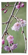 Cherry Blossoms In Early Spring Beach Towel