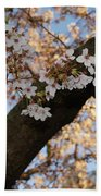 Cherry Blossoms Beach Sheet by Megan Cohen