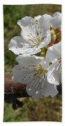 Cherry Tree Blossom White Flower Beach Towel