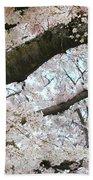 Cherry Tree In Bloom Beach Towel