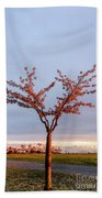 Cherry Tree Standing Alone In A Park, Lit By The Light  Beach Sheet