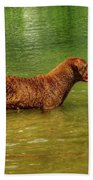 Chesapeake Bay Retriever Beach Towel