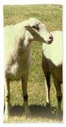 Cheviot Sheep Beach Towel