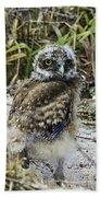 Chick Burrowing Owl  Beach Towel