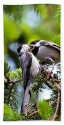 Chickadee Feeding Time Beach Towel