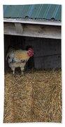 Chicken In Barn Beach Towel