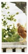 Chicken On Fence Beach Towel