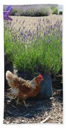 Chicken With Lavender  Beach Towel