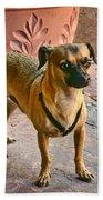 Chihuahua - Dogs Beach Towel