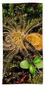 Chilean Tarantula Beach Towel