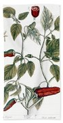 Chili Pepper, 1735 Beach Sheet