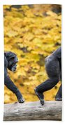 Chimpanzee Pair IIi Beach Towel
