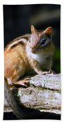 Chipmunk Portrait Beach Towel