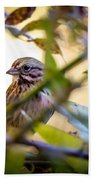 Chipping Sparrow In The Brush Beach Towel