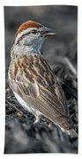Chipping Sparrow Beach Sheet