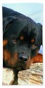 Chiron The Rottweiler  Beach Towel