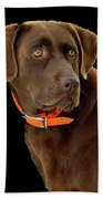 Chocolate Lab Beach Towel by William Jobes