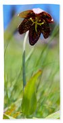 Chocolate Lily Two Beach Towel