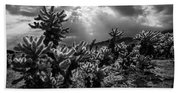 Cholla Cactus Garden Bathed In Sunlight In Black And White Beach Towel