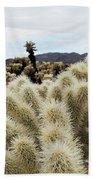 Cholla Cactus Garden Landscape Beach Towel