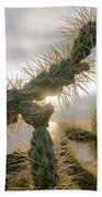 Cholla, Organ Pipe National Monument, Az  January 2015 Beach Towel