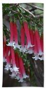 Christmas Bells 1 - Australian Native Fuchsia Beach Towel