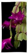 Christmas Cactus Purple Flower Blooms Beach Sheet