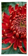 Christmas Chrysanthemum Beach Towel